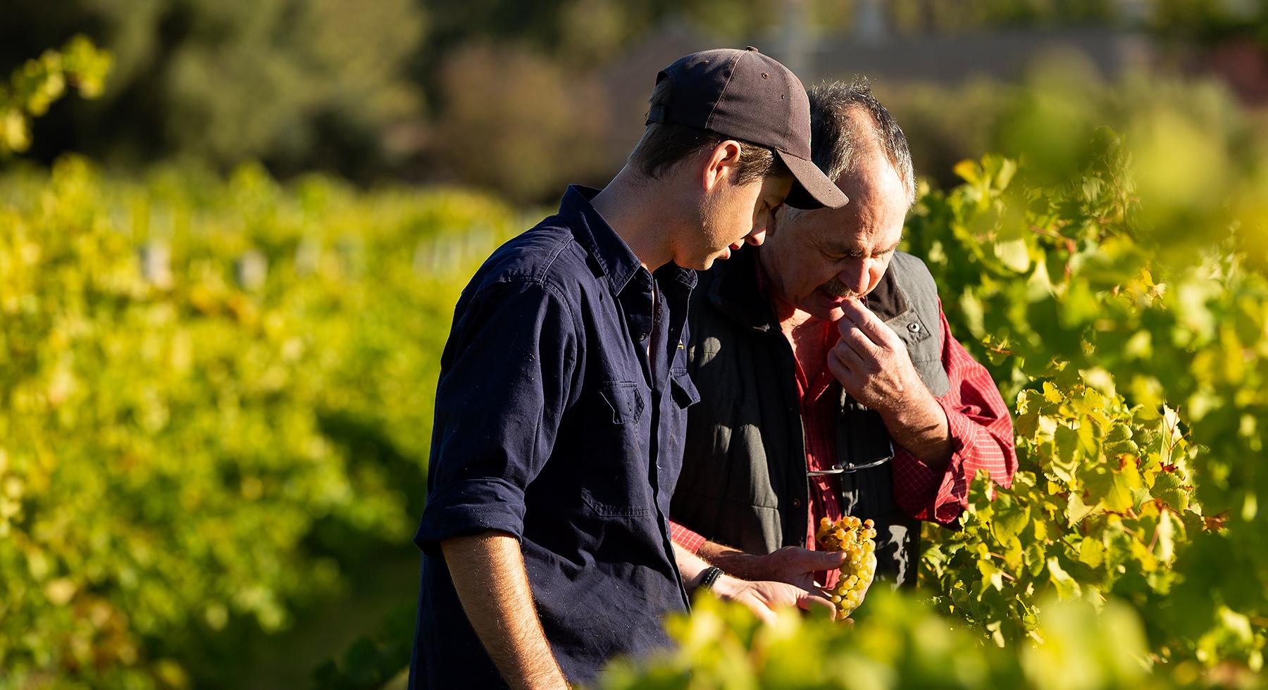 Pirramimma_viticulture-slider1