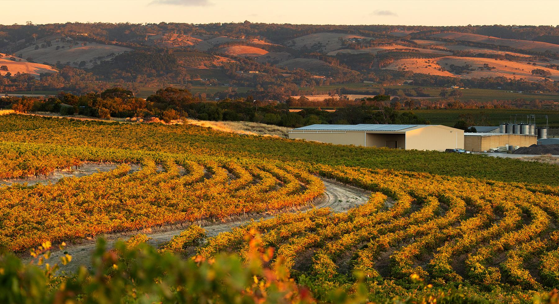 Pirramimma_viticulture-slider2