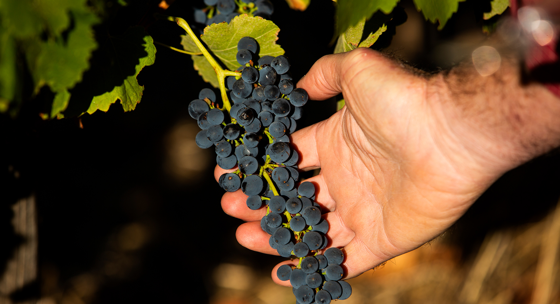Pirramimma_viticulture-slider4